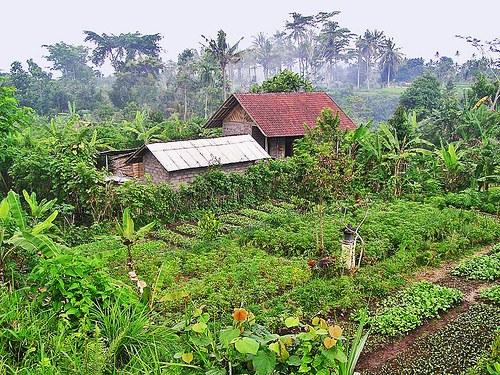 AGRICULTURA ECOLOGICA – alternativa de protectie a  mediului