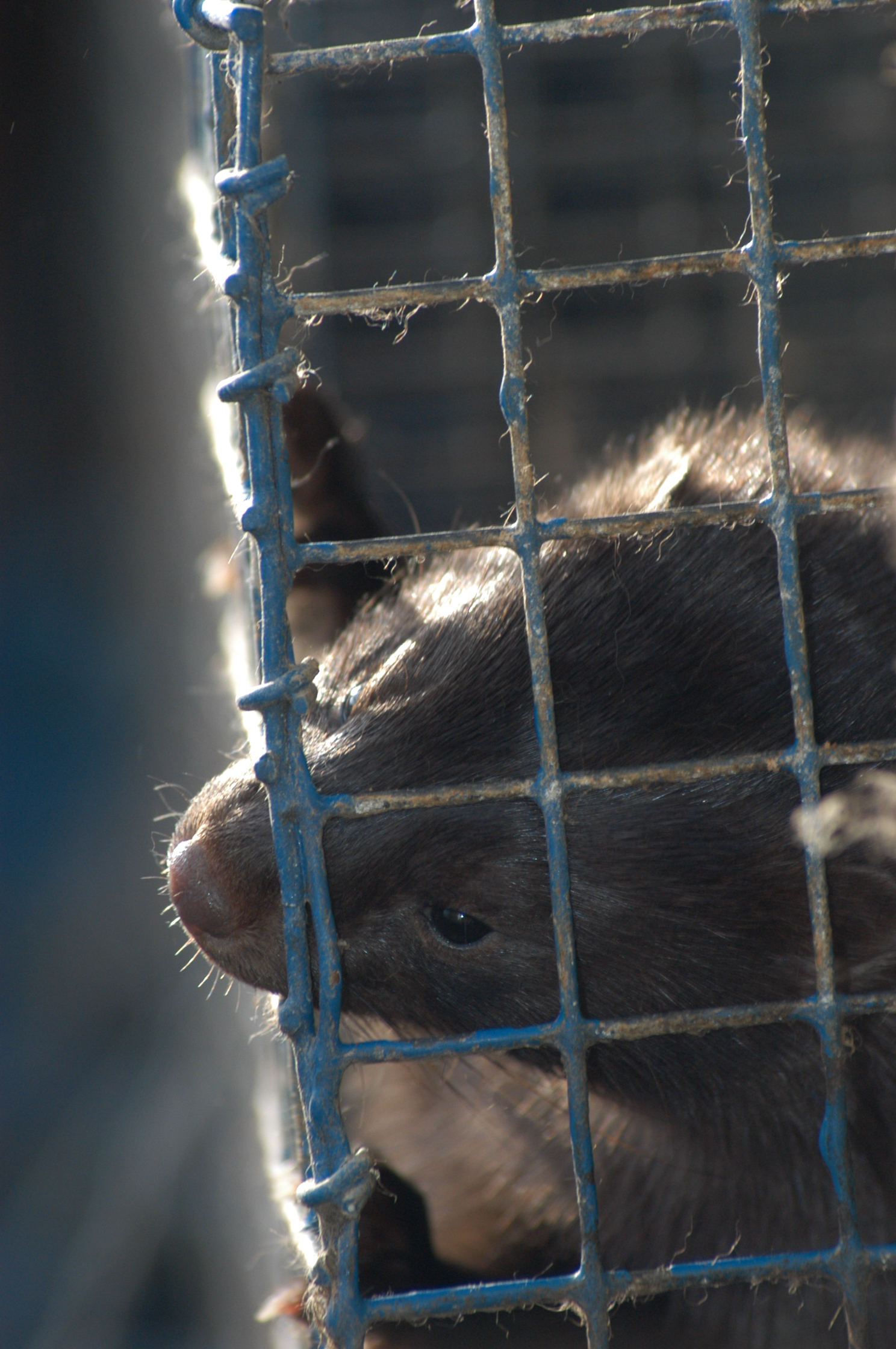 Fur Farm - Mink