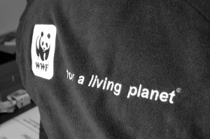 WWF Open Day, decembrie 2012  - foto Alex Miroiu