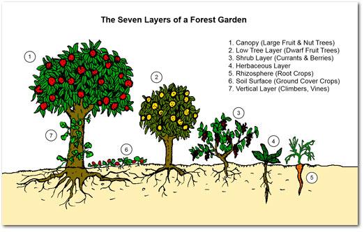 Food Forest sau Pădurea din Grădină