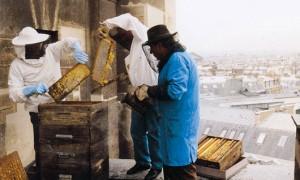 Albine pe acoperisul operei din Paris