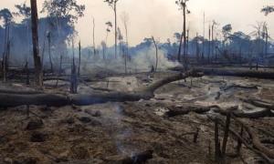 Catastrofa Ecologica - Greenly Magazine
