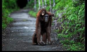 Borneo.
