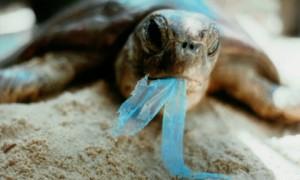 Cosmarul de plastic