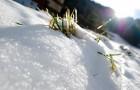 Zapada- binecuvantare pentru agricultura