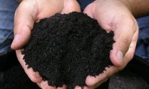 Humusul- fertilitate pentru sol