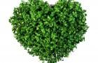 Inima verde