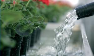 ingrasaminte pentru plante