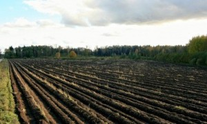 Despre desertificare, efecte... perdele forestiere