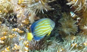 Un muzeu…ca un ocean! - Muzeul Oceanografic din Monaco - Greenly Magazine