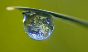Ziua Verde în organizația ta