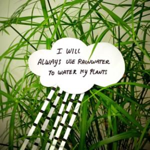 Voi uda florile cu apa de ploaie