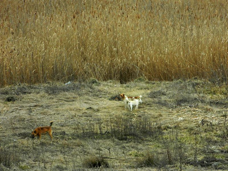 Caini fara stapan in zona Lacului Vacaresti