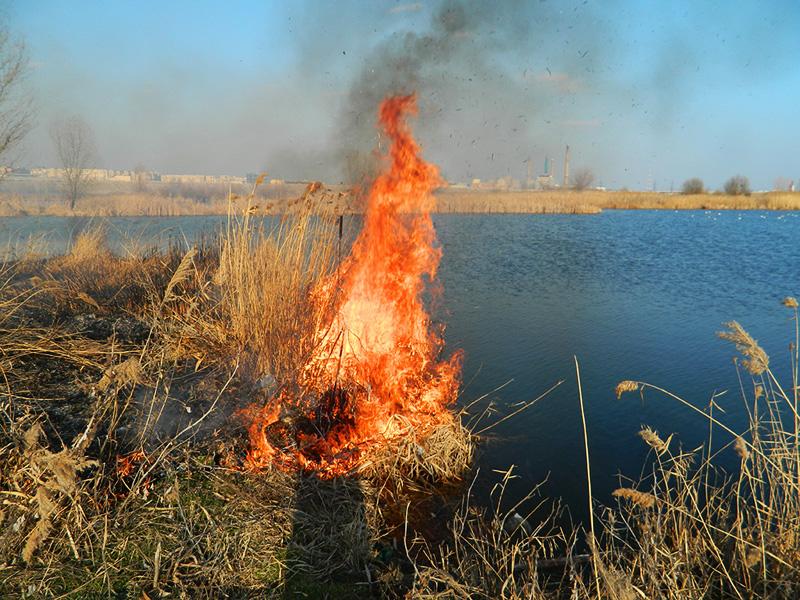 Incendiu in zona Lacului Vacaresti