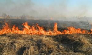 Incendiu in Rezervatia Naturala Vacaresti