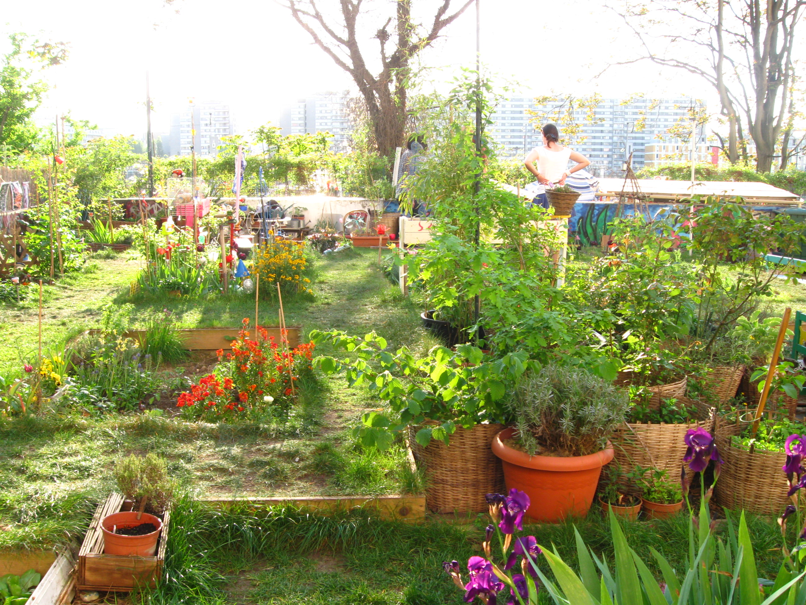 jardin_partage_ecobox_-_paris_18eme_-_photo_de_laurene_caudal_1_