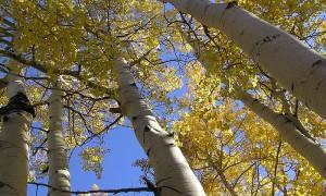 În căutarea celui mai bătrân copac din lume - Greenly Magazine