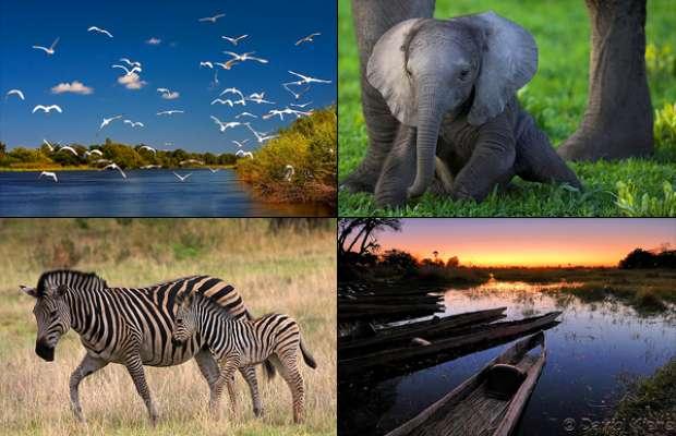 delta-okavangoului-botswana_6fff04e9e4f956