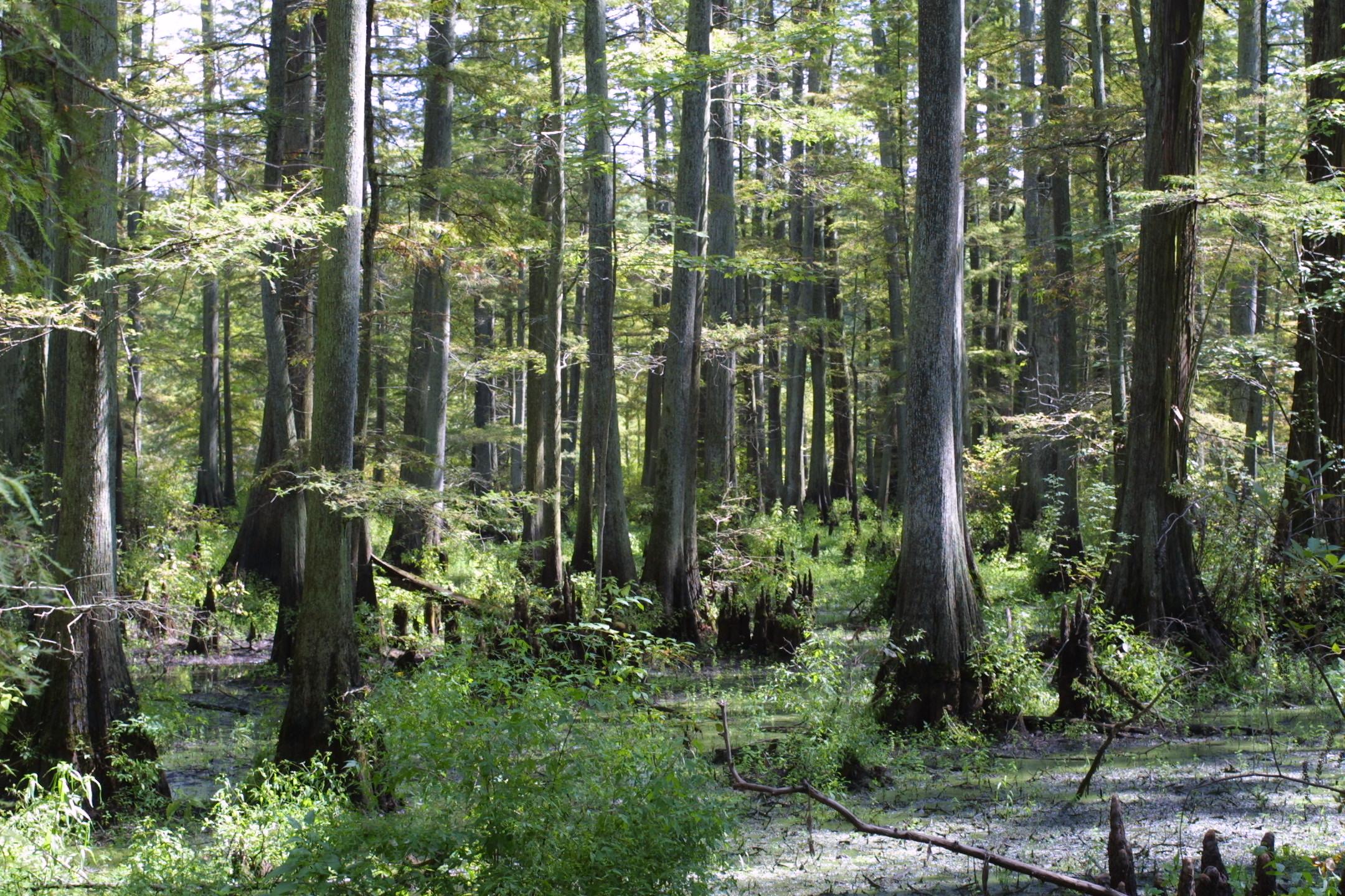 Pădurile din Delta Dunării