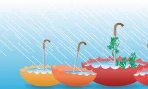 10000-rain-gardens