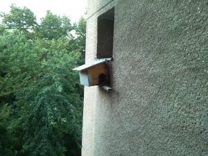 Căsuța porumbeilor mei, la geamul de la baie...