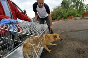 FOUR PAWS SAC PROJECT IN KIEV