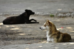 FOUR PAWS SAC PROJECT IN ZAPORIZHZHYA