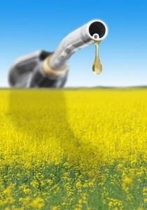 biocombustibil