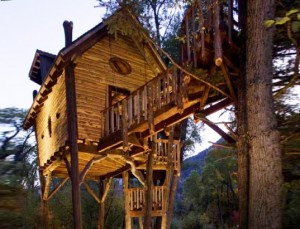 crystal-treehouse-537x411
