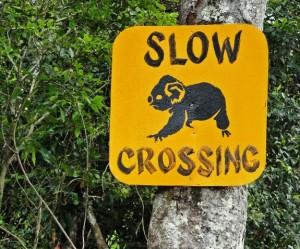 Koala crossing sign in Australia