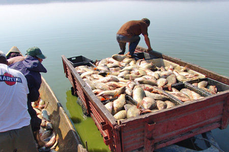 Verde-la-pescuitul-de-ştiucă-din-Delta-Dunării