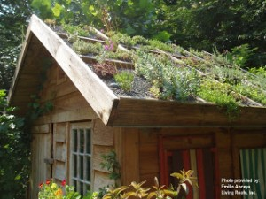 Acoperis verde realizat din panouri prefabricate cu plante suculente (http://greenroofromania.blogspot.ro/2010/11/imagini-acoperis-verde-green-roofs.html)