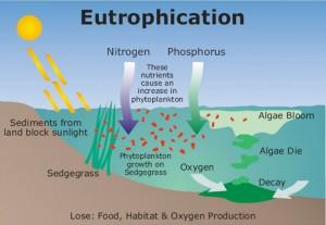 eutrofización-1024x708