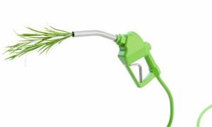 România poate contribui la o producție sustenabilă de  biocombustibili în UE
