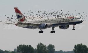 Zburătoarele, inamicul numărul unu al avioanelor - Greenly Magazine 1