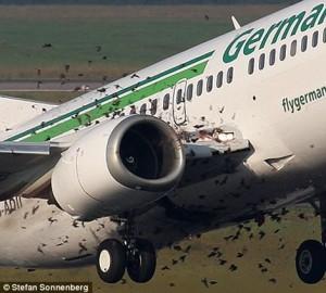 Zburătoarele, inamicul numărul unu al avioanelor - Greenly Magazine