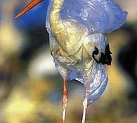 bird-caught-in-a-bag