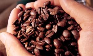 Cafeaua arabică - amenințată de dispariție din cauza schimbărilor climatice