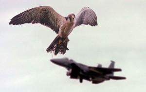 Zburătoarele, inamicul numărul unu al avioanelor - Greenly Magazine 2
