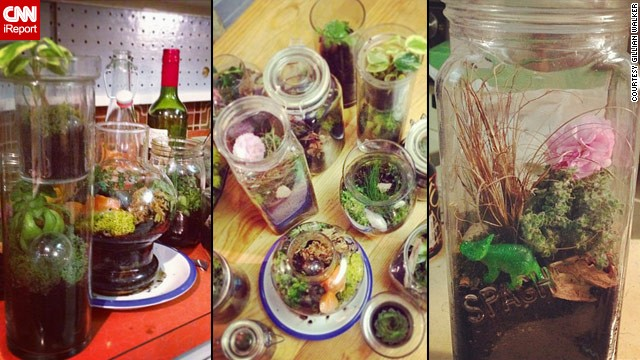 130419183932-terrariums-display-planters-groups-horizontal-gallery