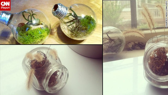 130419184555-terrarium-atlanta-lightbulb-glass-jar-horizontal-gallery