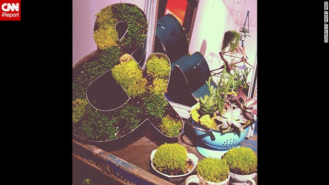 130419191922-terrarium-planter-ampersand-sign-horizontal-gallery