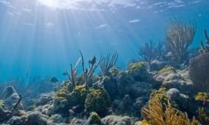 Biscayne_underwater_NPS1_d6e9716639