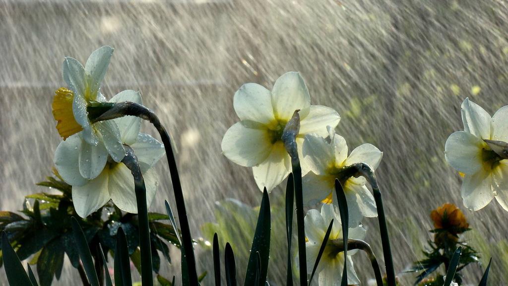 imagini-de-ploaie-1