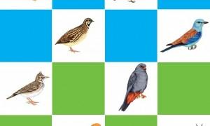 Păsările protejate prin rețeaua Natura 2000 sunt monitorizate printr-un program național