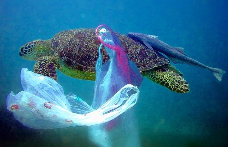 plastic-bags-turtle