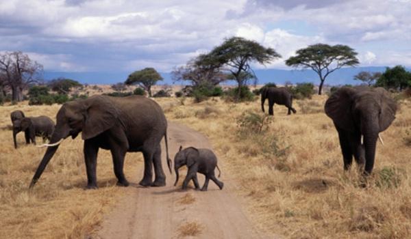 080819-elephants-big