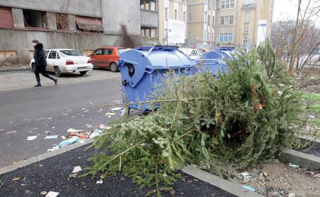 Sursă foto: gradinavisata.wordpress.com
