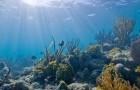 Biscayne_underwater_NPS1_d6e9716639-300x180