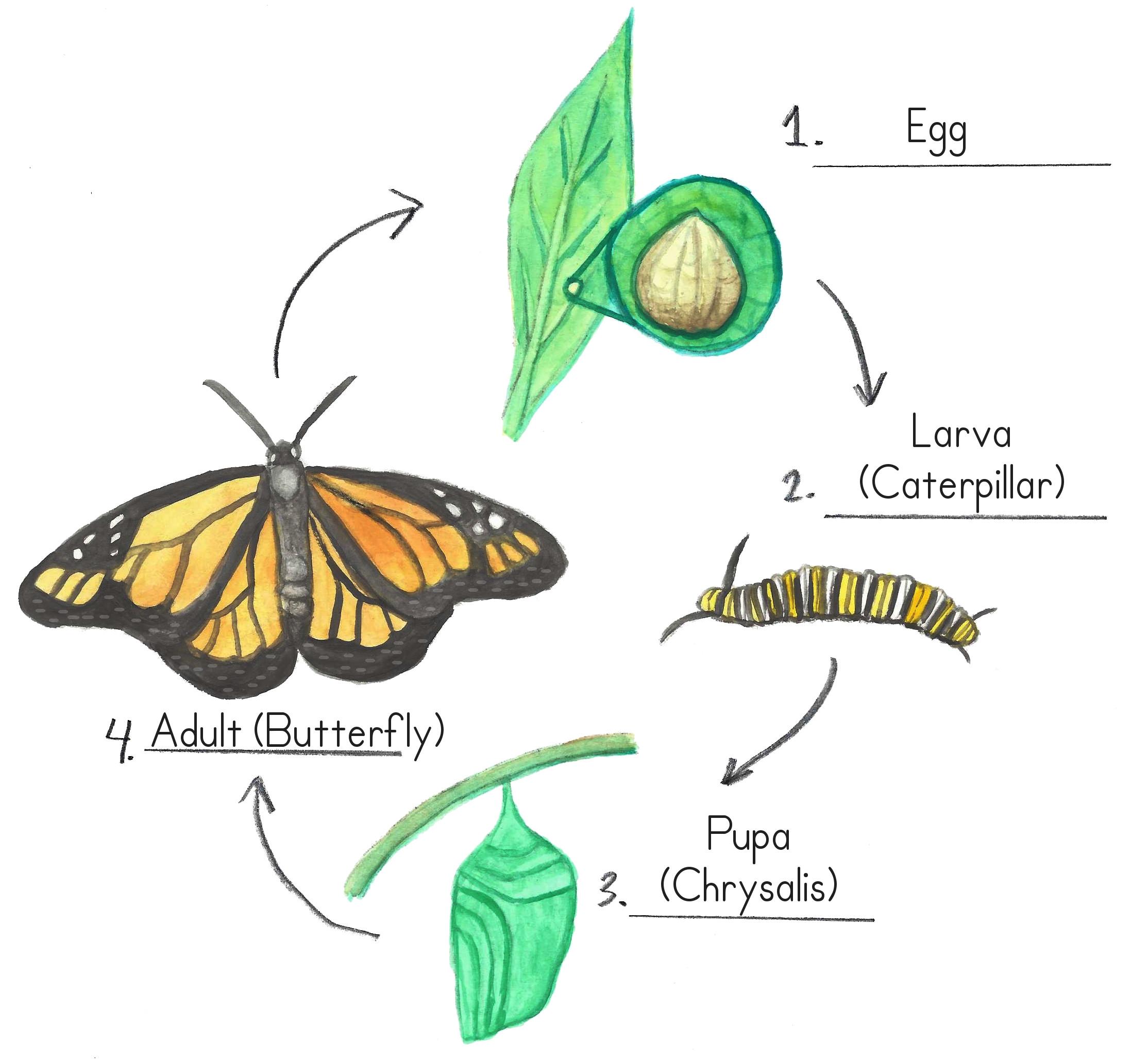 fluturii sunt paraziți giardia adică greacă